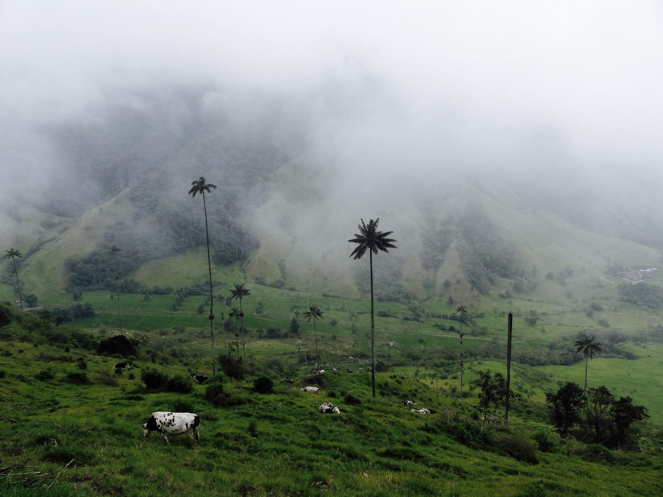 Blog vallée cocora salento colombie