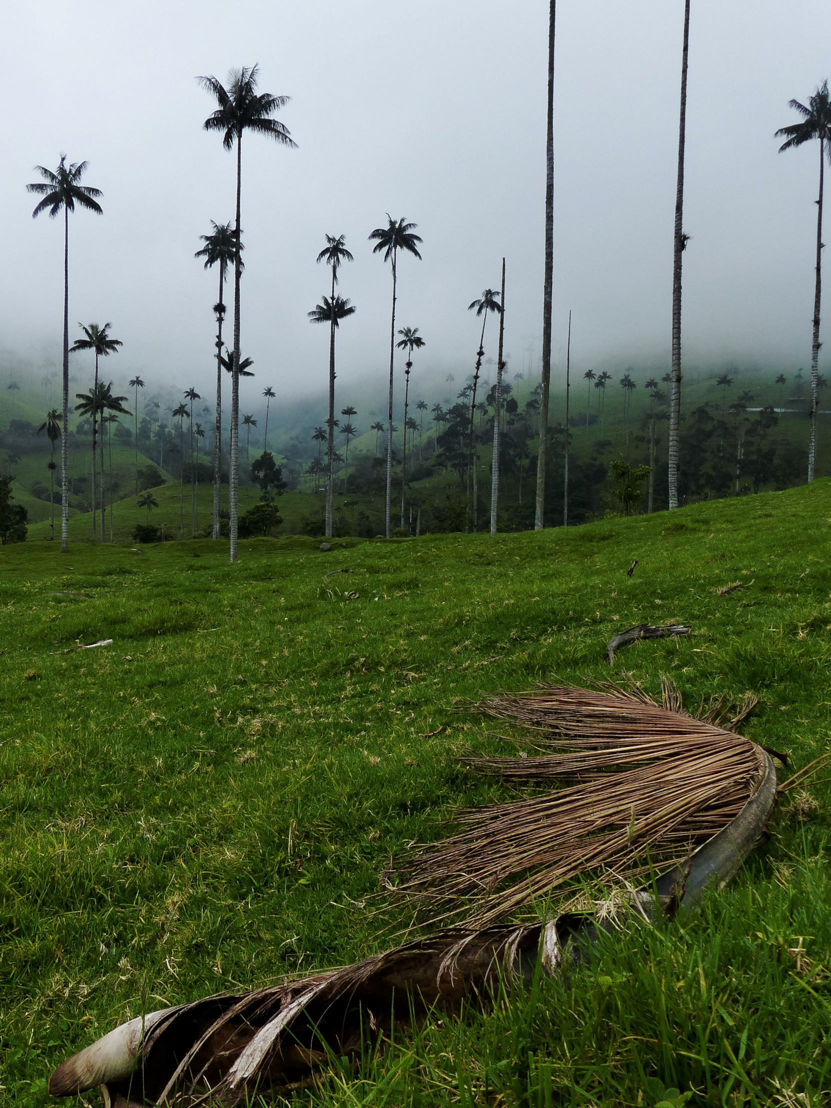 Blog vallée cocora salento colombie