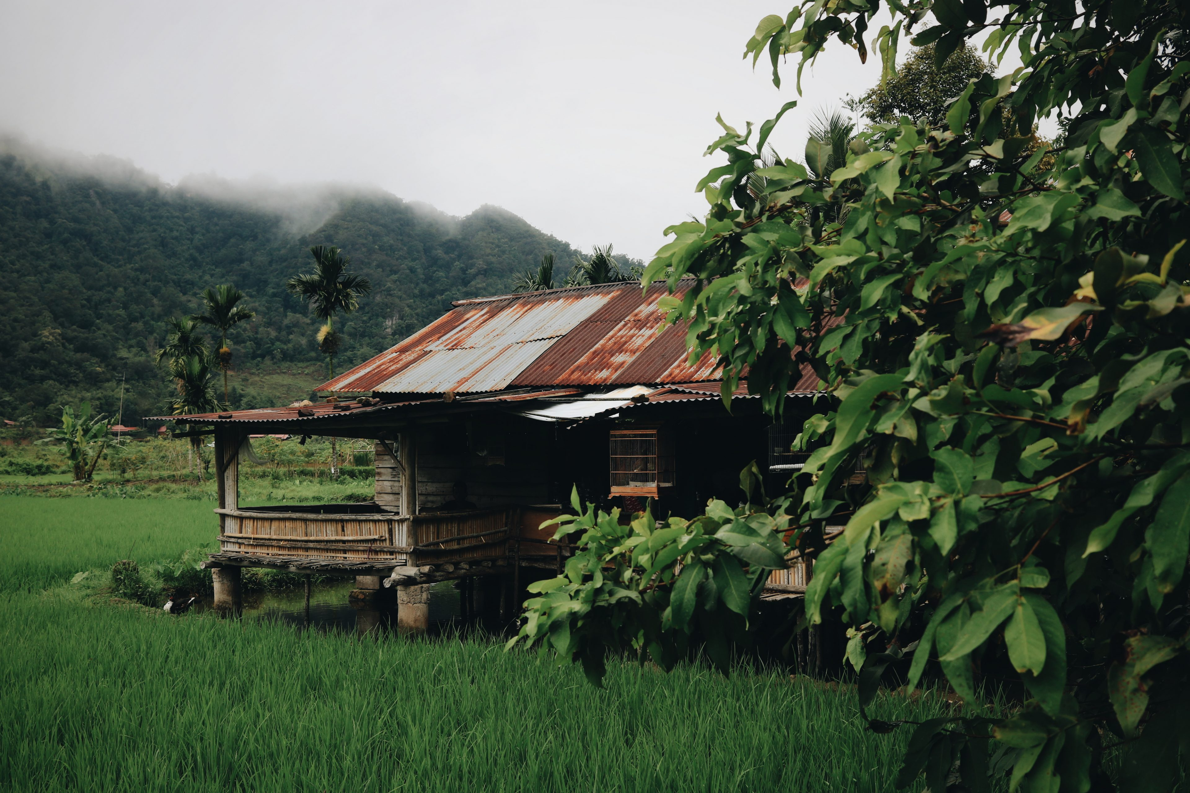 Blog voyage Sumatra Indonésie