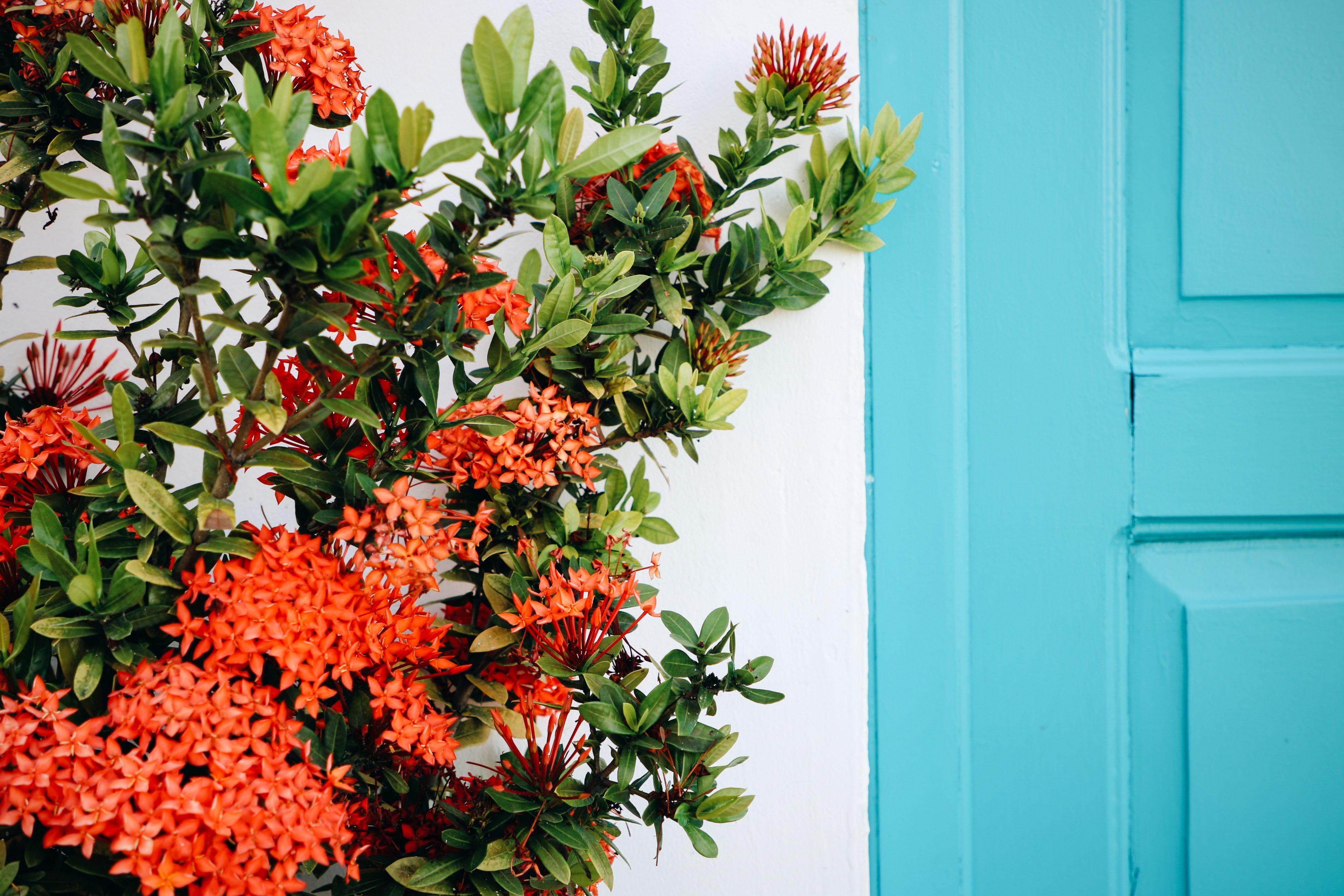 Blog voyage flores