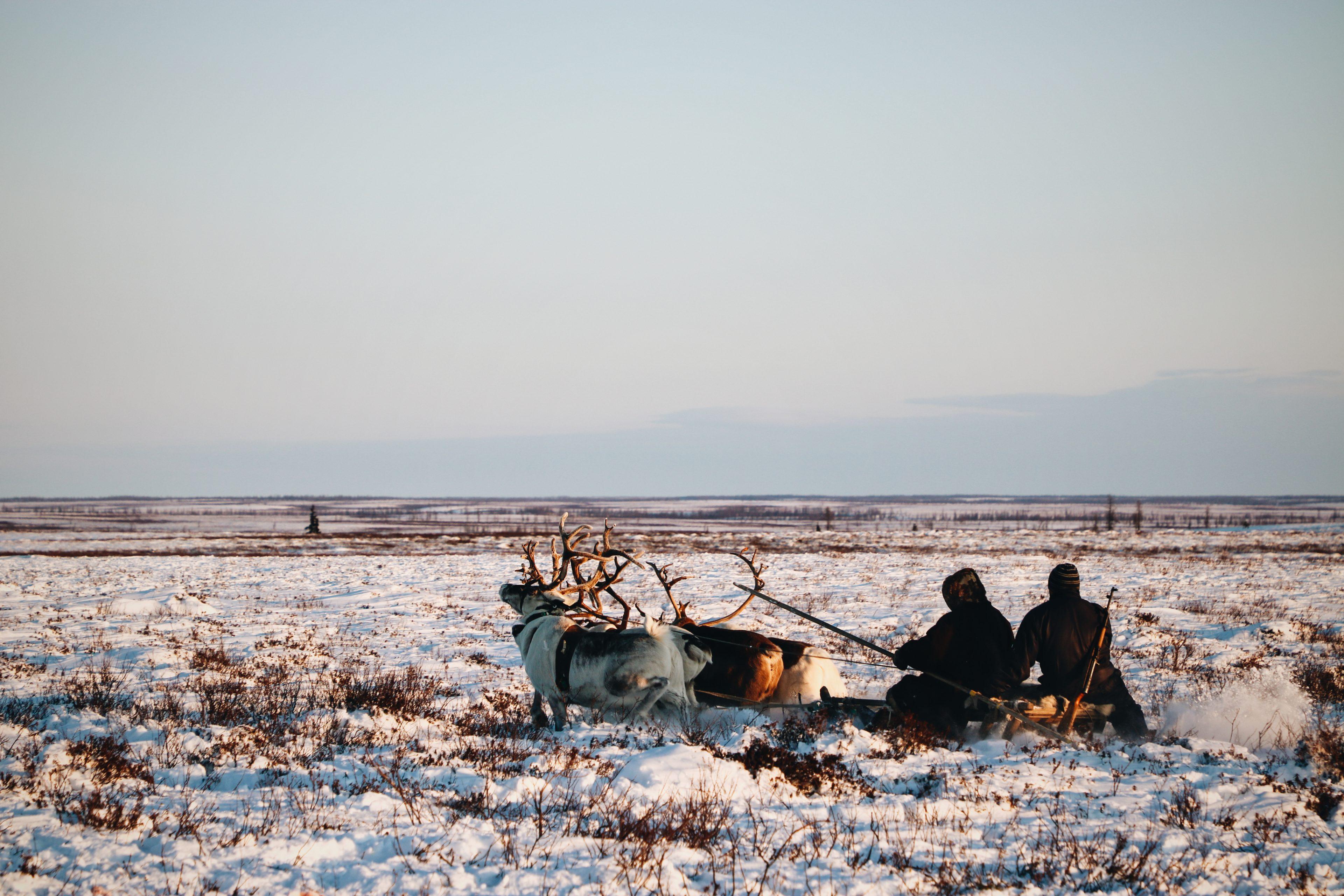 voyage Nenets sibérie