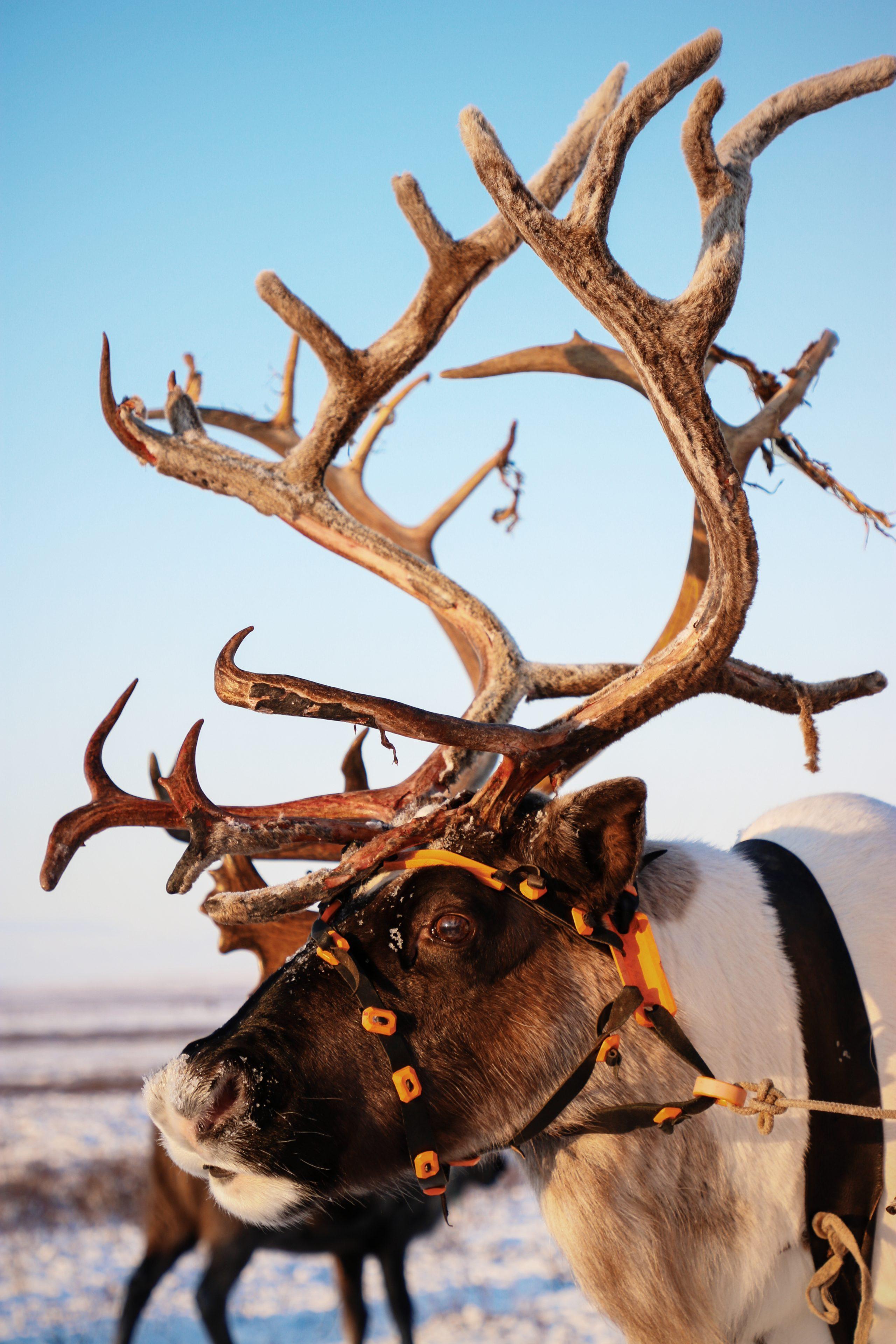 Voyage Yamal Sibérie