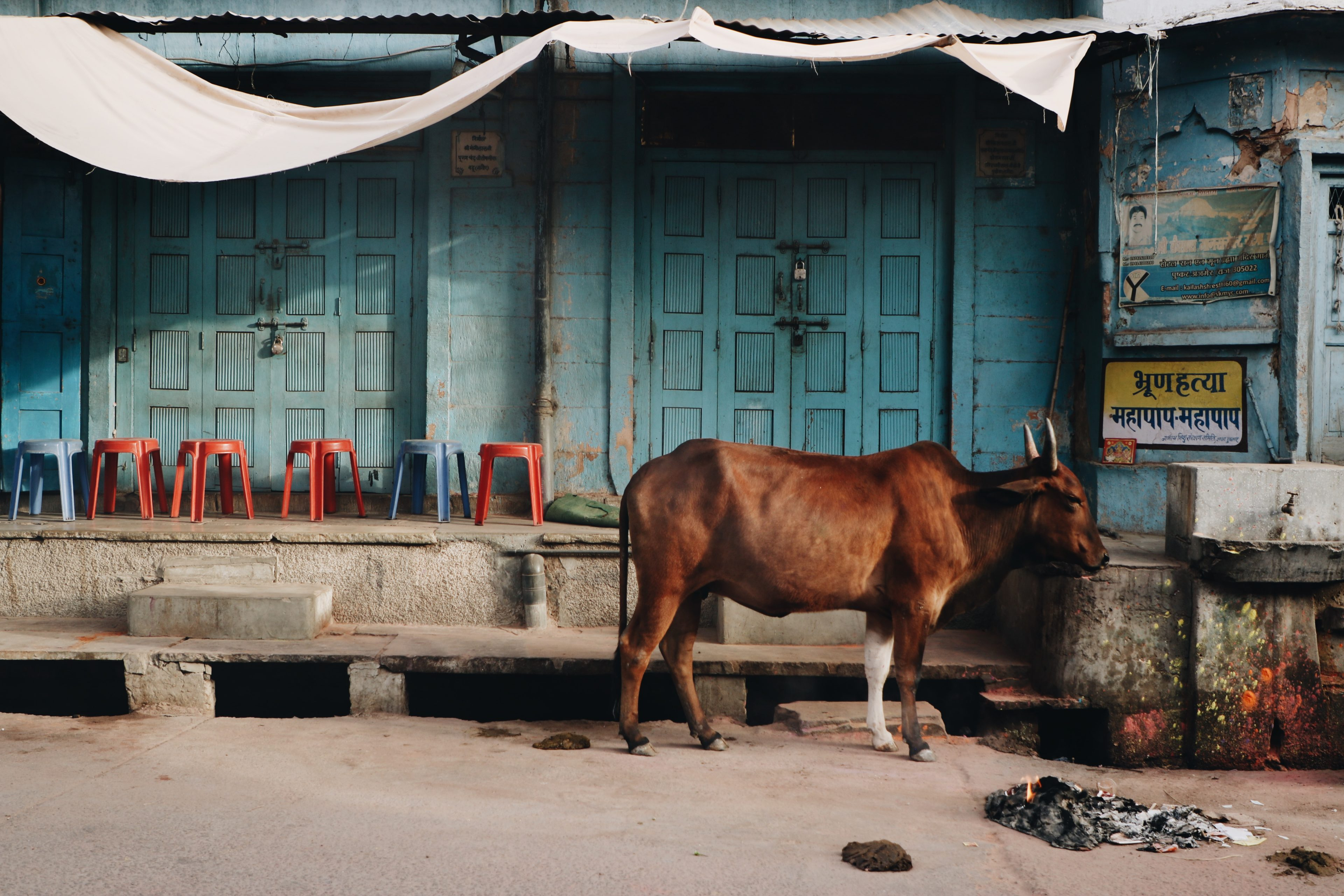 Blog voyage Pushkar